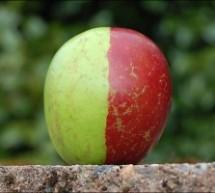 Kızıl-Yeşil Bir Perspektif: Ekososyalizm – Nazen Şansal