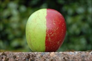_46444386_apple