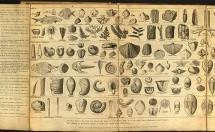 TÜRLERİN KÖKENİ VE DARWIN (24 Kasım 1859′da Darwin'in Türlerin Kökeni eseri yayımlandı) – Pınar Piro