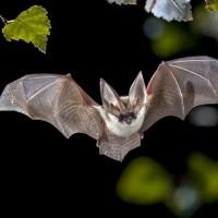 bats-2