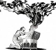 Pandora'dan Pandemiye- Serap Kedi